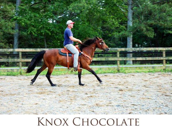 Knox Chocolate